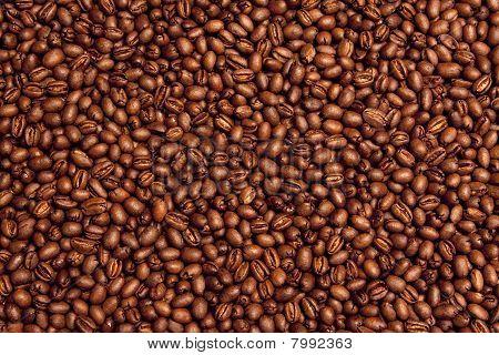 Kona Coffee Bean Background