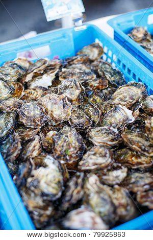 Fresh Oysters On Mediterranean Street Market.