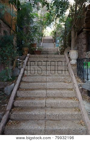 Stone stairs with greenery