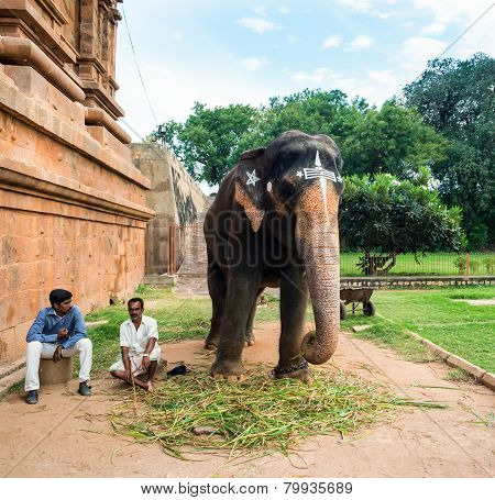 Thanjavour, India - February 13: An Unidentified Men Sits At The Gate Of The Temple Brihadishwara Ne