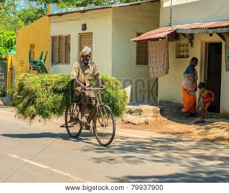 Madurai, India - February 17: Indian Rural Man Rides A Bicycle And Takes The Shock Of Green Grass. I
