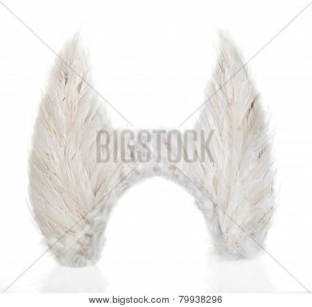 Pair Of Wings Made From White Feathers