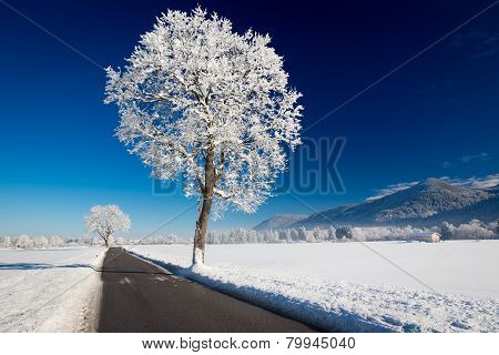Winter landscape at a sunny day. Allgäu, Germany