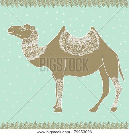 Camel Egypt Tender