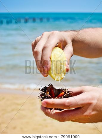 Man Holding A Sea Urchin For Eating It On The Beach