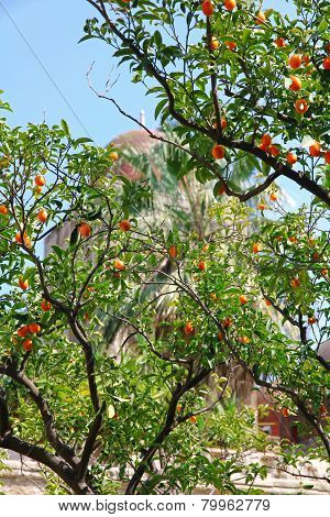Italy. Sicily Island. Palermo City. Orange Tree Against The San Giovanni Degli Eremiti Church