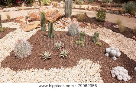 Cactus Plants In Garden