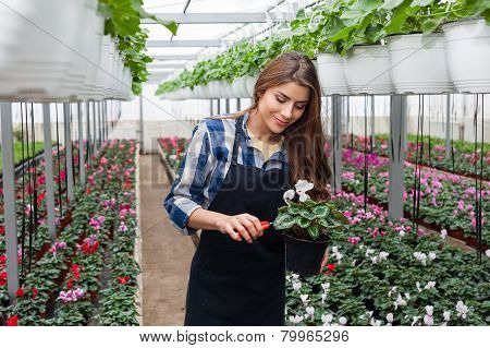 Florists woman working with flowers.