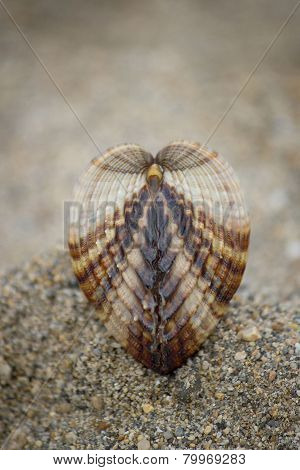 Seashell On Brown Beach Sand Background