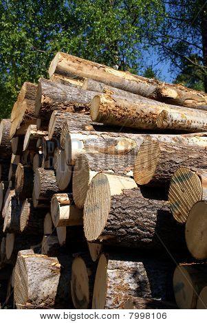 Timber Logs Piled Up