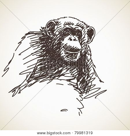 Sketch of chimpanzee, Hand drawn vector illustration