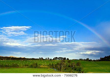 Rainbow Over A Sheep Farm