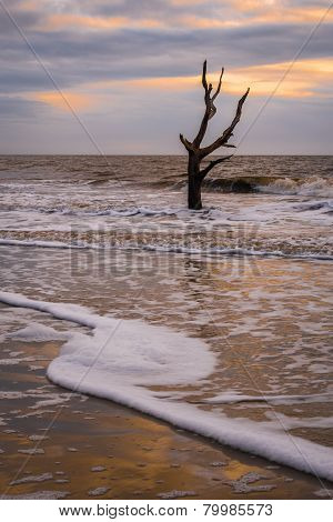 Hunting Island Skeleton Tree 2