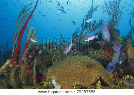 School Of Fish Over A Tropical Coral Reef