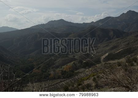 burnt trees and mountainous landscape