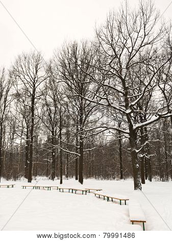 Snow Covered Benches On Glade Of Urban Park