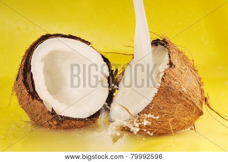 Coconut Milk Splash