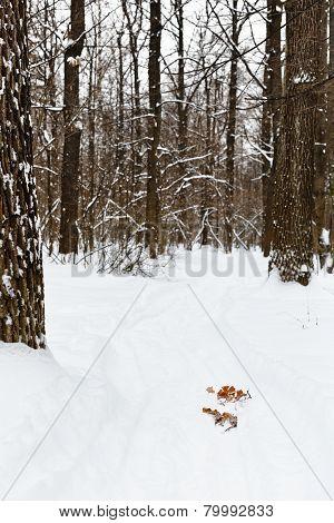 Ski Run In Snowy Forest
