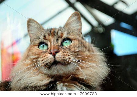 Eyed cat