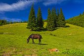 image of mare foal  - Mare and foal grazing in a sunny green meadow