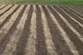 pic of plow  - Plowed field in the northern Bulgaria in the summer - JPG