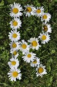 pic of alphabet letters  - letters of daisies on the green grass background - JPG