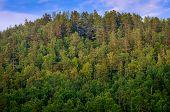 stock photo of siberia  - View on top of forest hill in Siberia on sunset - JPG