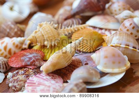 different shells