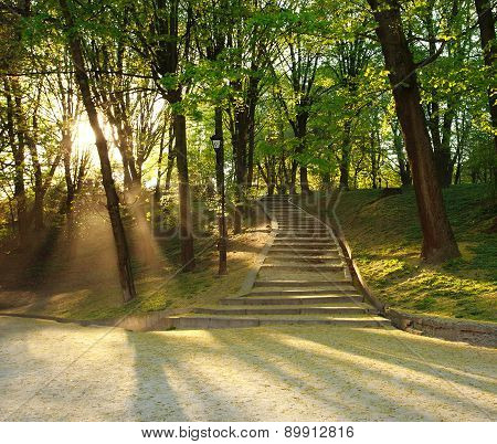 Footpath In Green City Park, Lighted The Rays Of Sunset