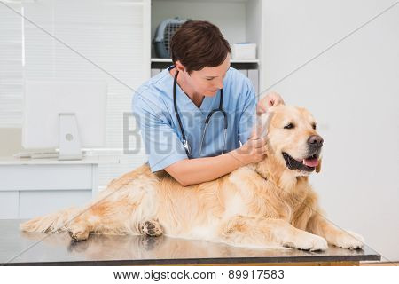 Veterinarian examining a cute dog in medical office