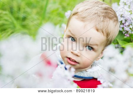 Portrait Toddler Boy Plucks Flowers