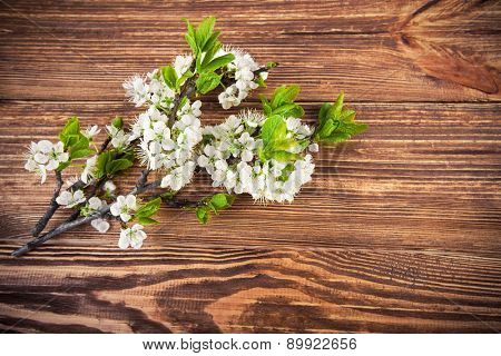 Branch blooming tree plum on wooden board