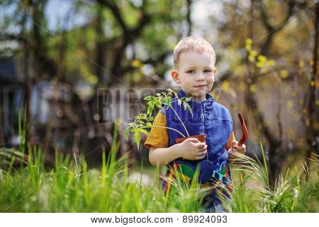 Little Boy Planting And Gardening Tomato Seedlings