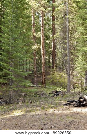 Picnic Area In The Forest Central Oregon.