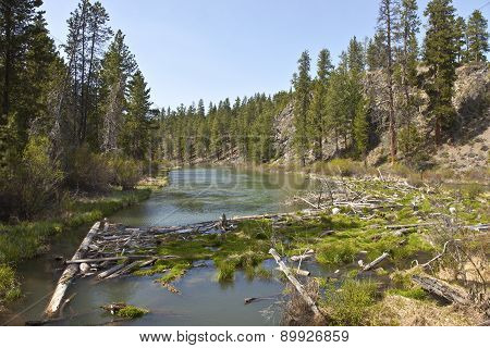 Log Jam In A River In Central Oregon.