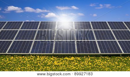 Sunlight Gleams Off Solar Panels In A Field Of Wild Flowers