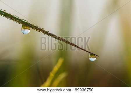 Green  Grass Leaves With Dew Drops Close Up