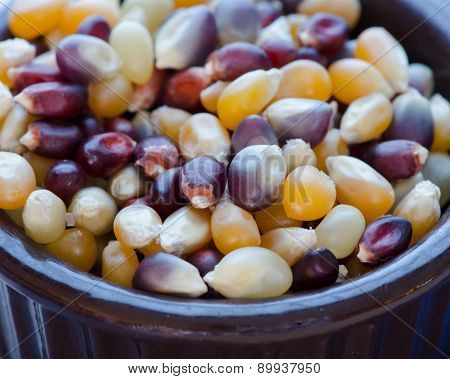Close-Up Organic Popcorn Kernels