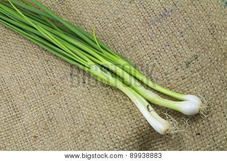 onion spring group on sack background;