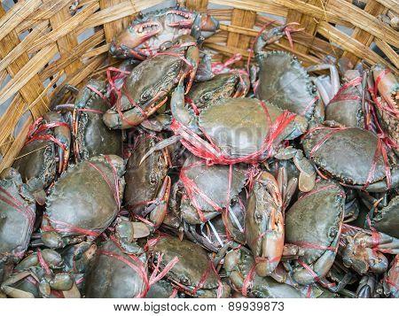 Fresh Living Crabs