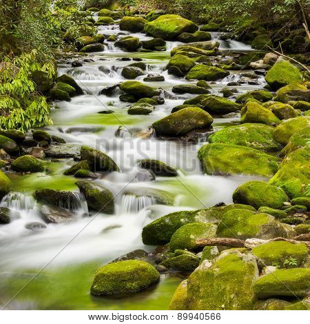 Tranquil Stream In The Smokies
