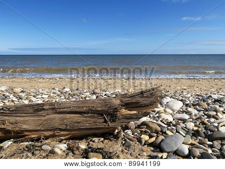 Driftwood On Stoney Beach