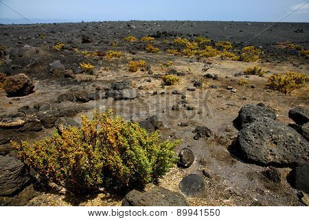 Plant Flower    Timanfaya Volcanic Rock Stone Sky  Hill   Lanzarote