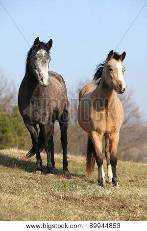 Two Horses Looking At You