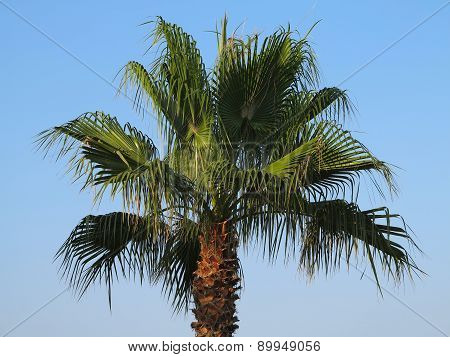 Palm Tree In Sunset Over Blue Sky