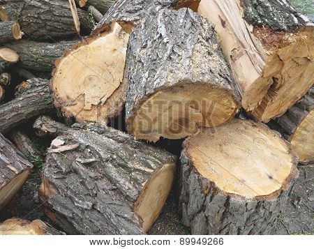 Cut And Piled Brown Wooden Logs