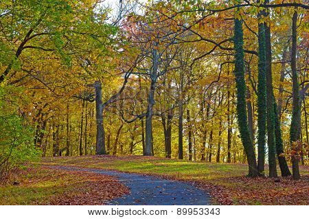 A walkway along deciduous trees in early fall.