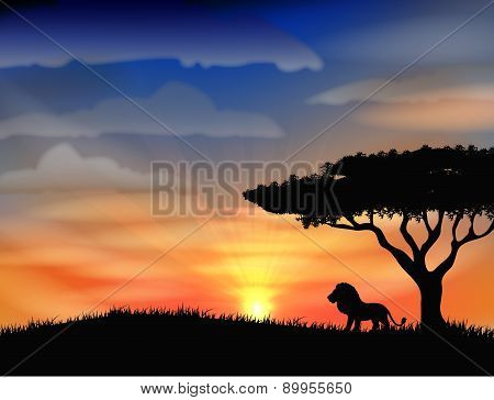 Sunset at africa with animal