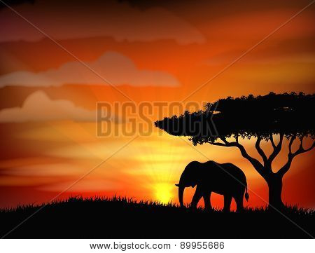 African elephant against a perfect South African sunset sky