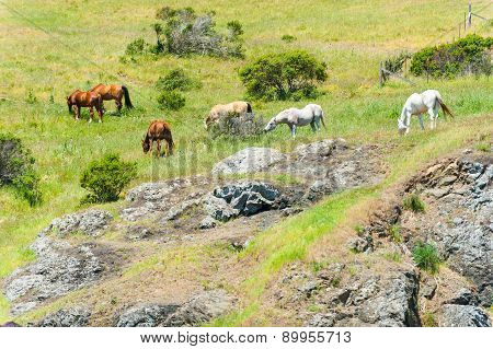 Group Of Horses Eating On Hillside Field
